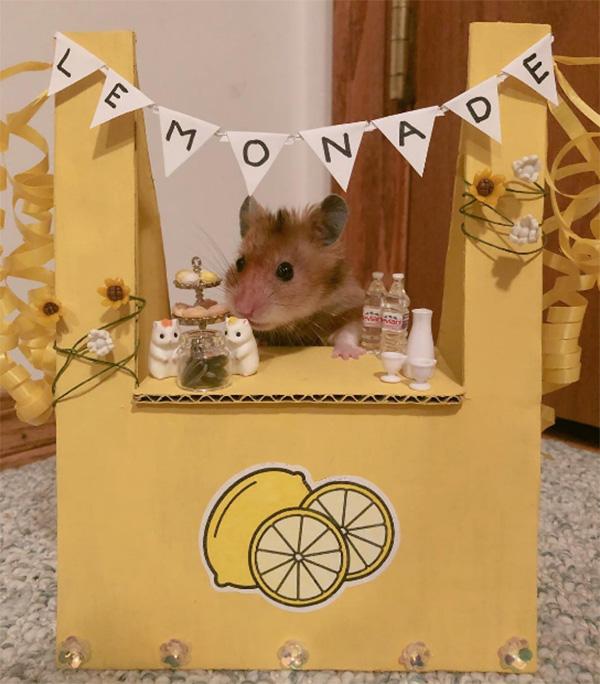 hamster lemonade stand