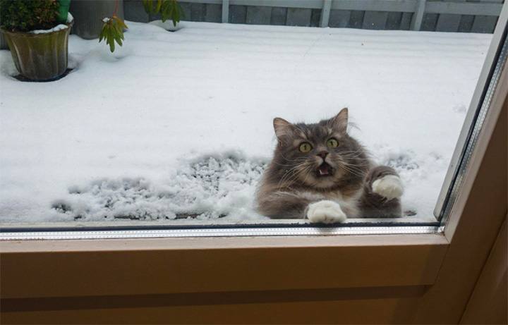 cat in snow funny