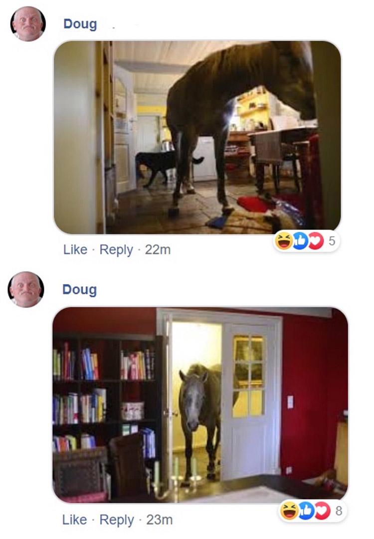 horse walks in random house