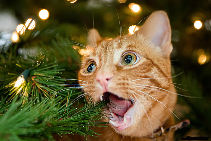 cat eating christmas tree