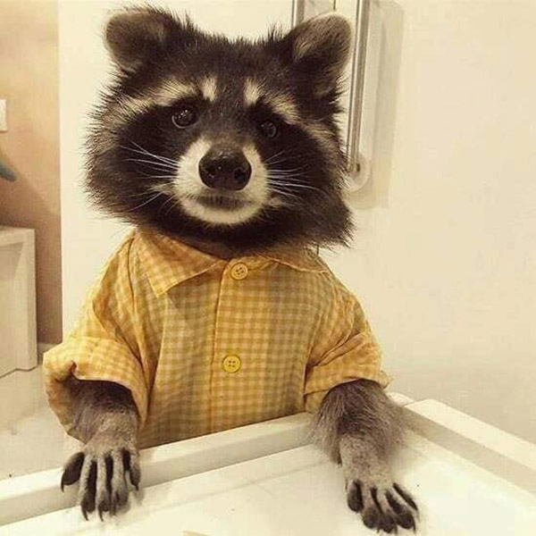 handsome trash panda