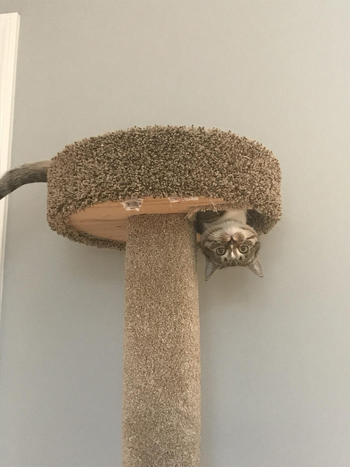 cat in tree upside down