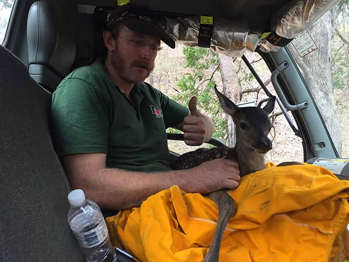 firefighters rescue baby deer from fire
