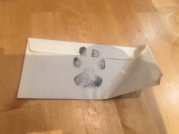 4 roommates get letter from dog