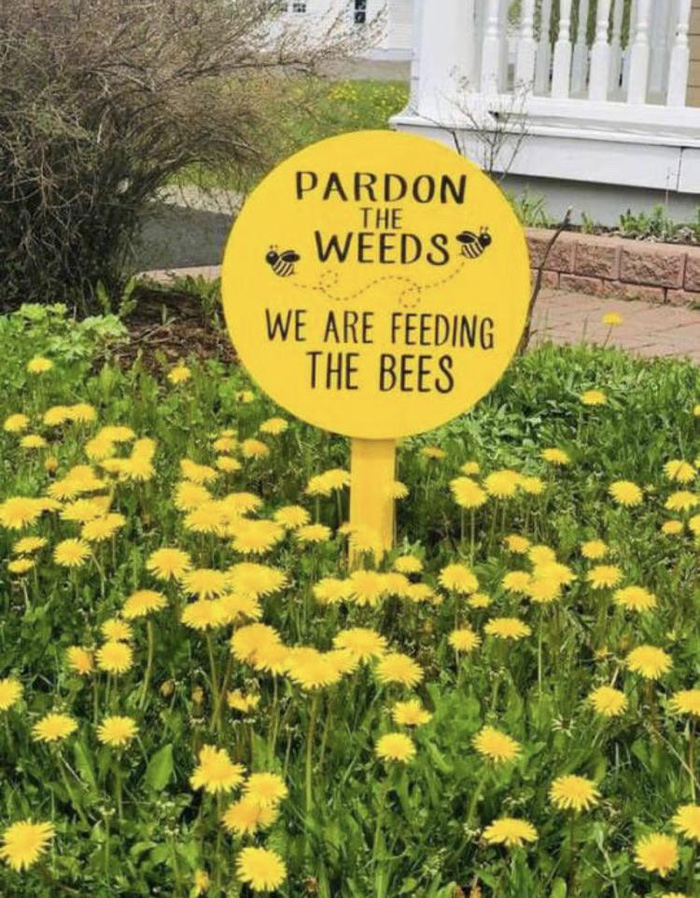 feed the bees sign weeds