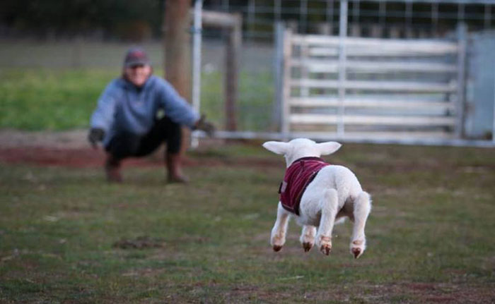 lamb hug