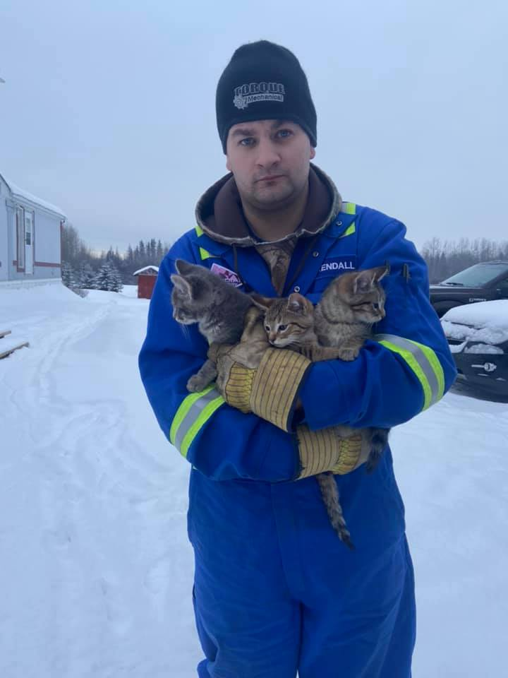 man rescues frozen kittens with coffee