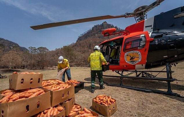 helicopters drop food for animals australia
