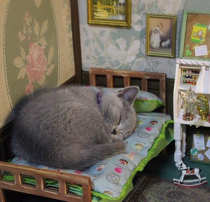 cat sleeping in mini bed