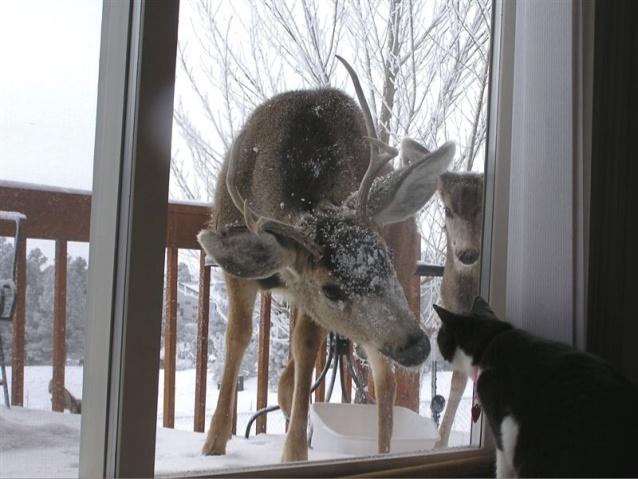 wild deer meet cat