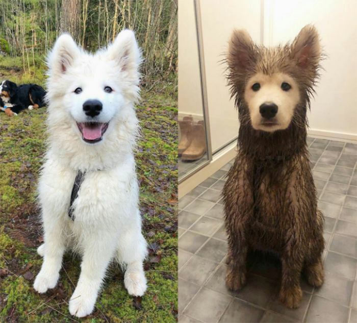 dog before and after play date