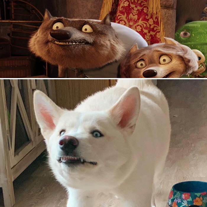 dog looks like werewolf