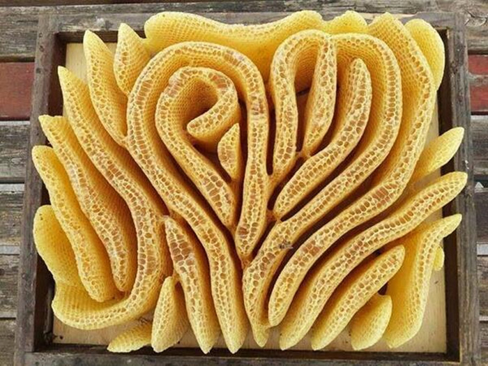 heart shaped bee honeycomb