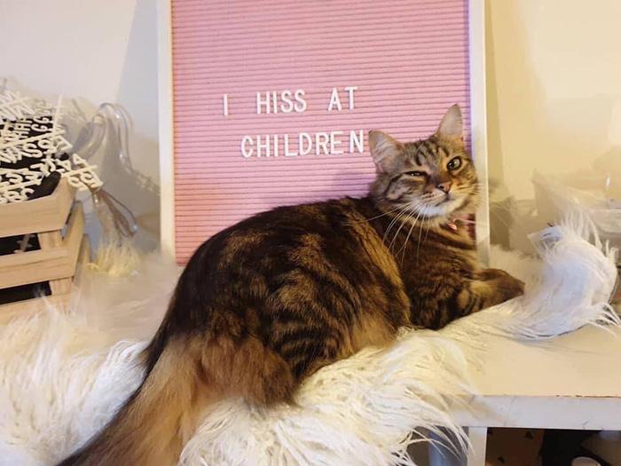 I hiss at children cat