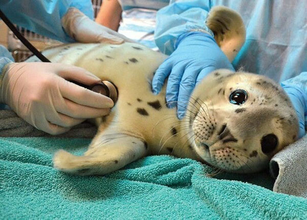 cutest patient seal