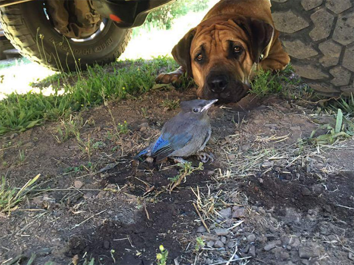 dog protects injured bird