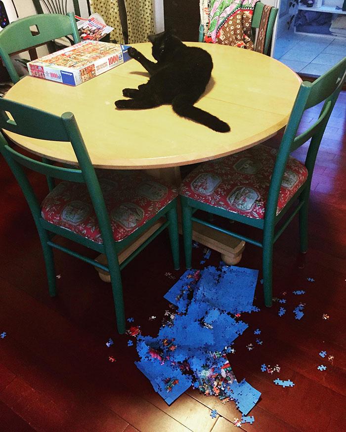 cat ruins puzzle