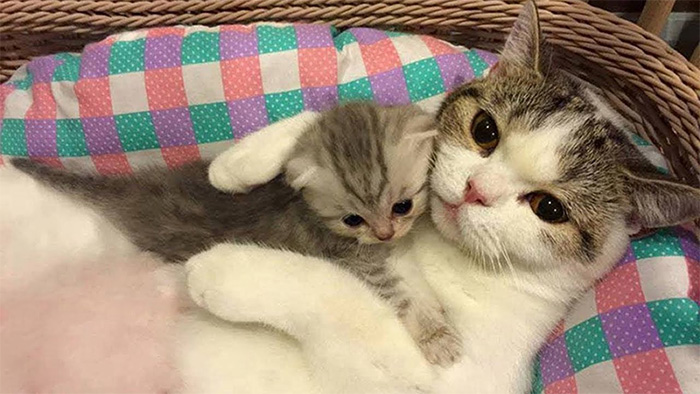 mom cat with kitten