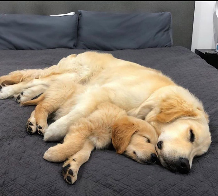 mother and son dogs nap