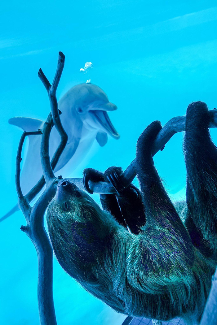 dolphin sees sloth