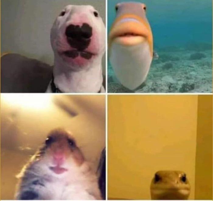 animals using facetime
