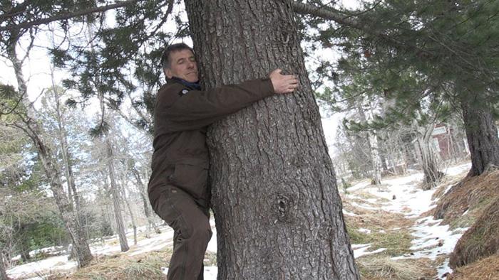 hug a tree coronavirus