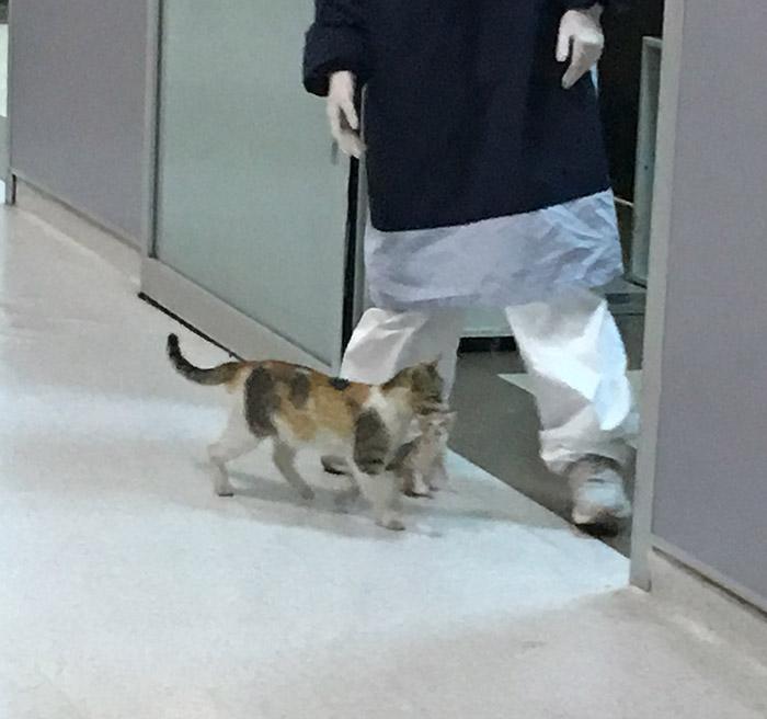 cat brings kitten to ER hospital turkey
