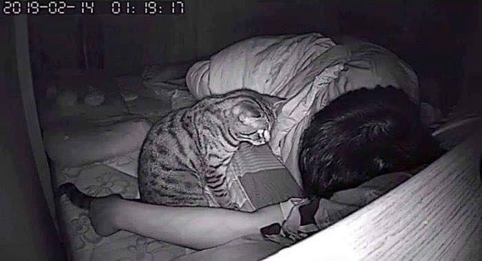 cat sleeping on face