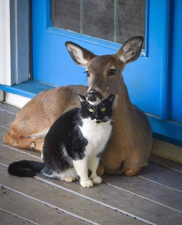 cat and deer