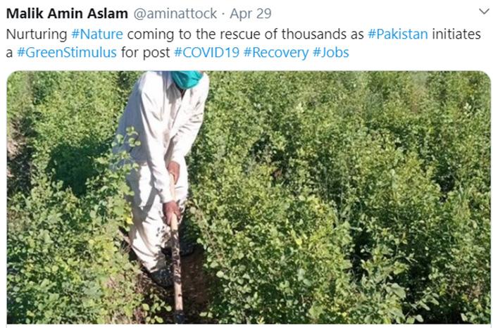 pakistan 10 billion trees