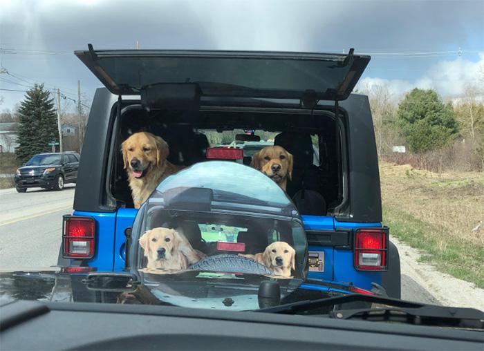 dog traffic