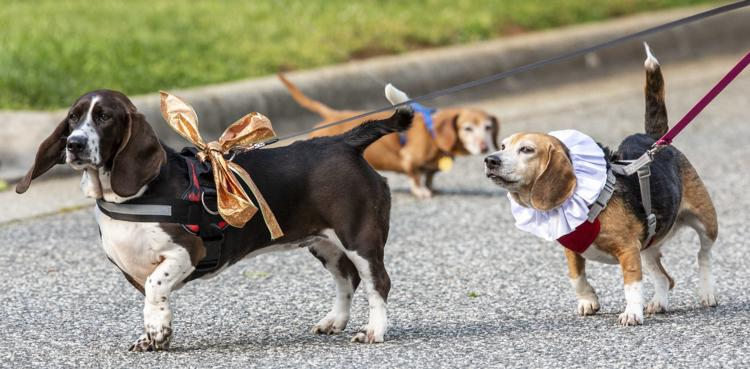 dog parade for little girl birthday