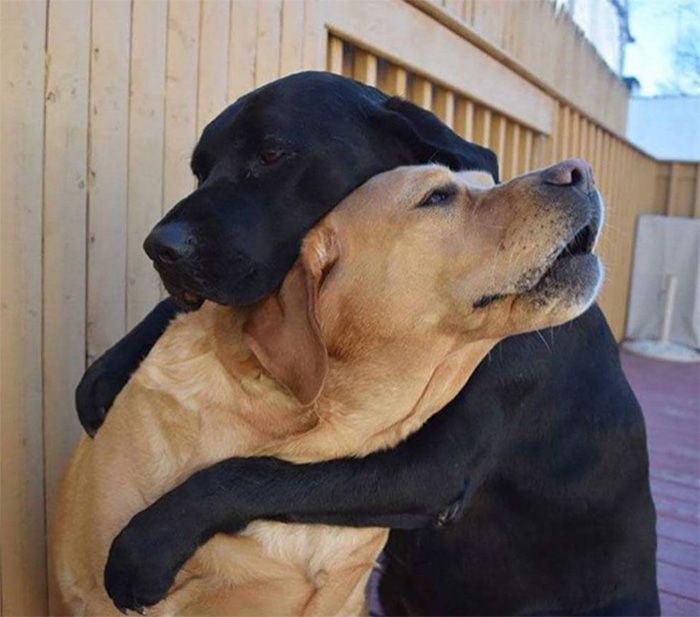 dogs hug each other