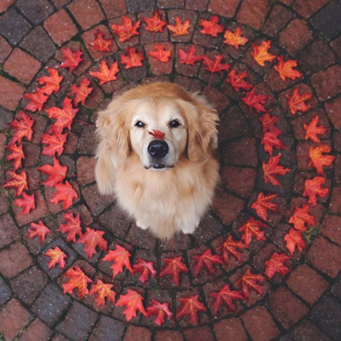 golden leaves circle
