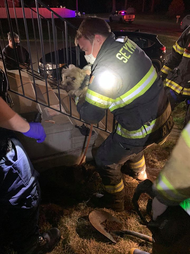 firefighters rescue dog under porch