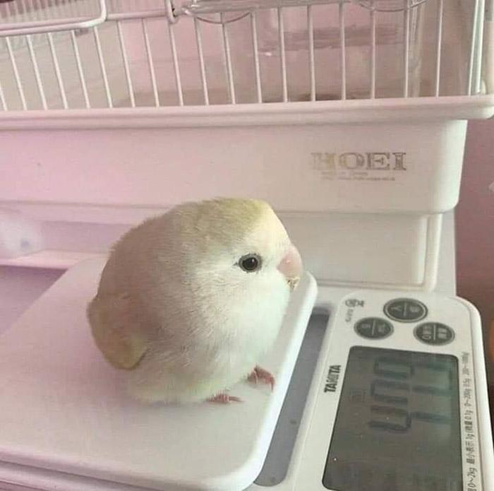 bird on a scale
