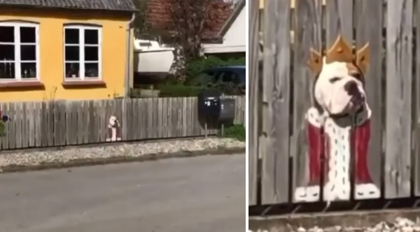 Family Paints Fence Where Their Dog Likes To Peak His Head