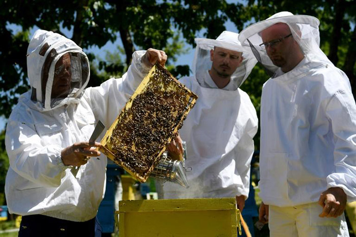 bees thriving during pandemic