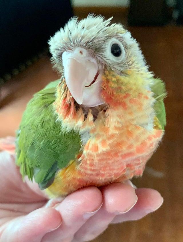 baby bird smiling