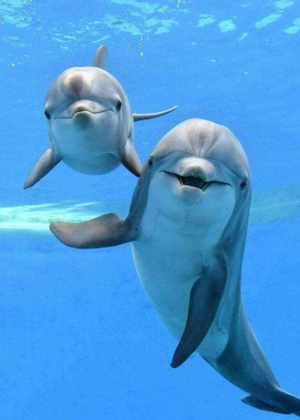 dolphin and mini me