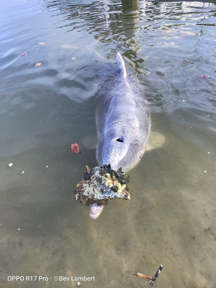 dolphins bring gifts to shore