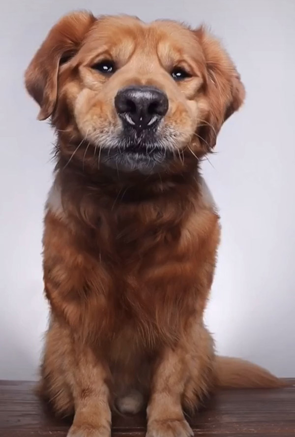 funny pet photography photos