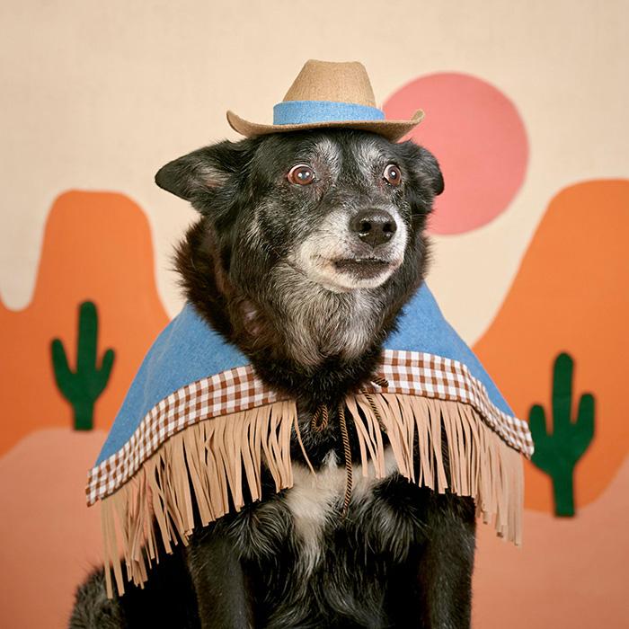 howdy dog