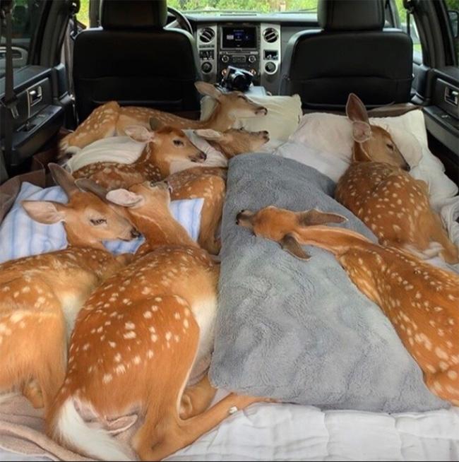 deer uber