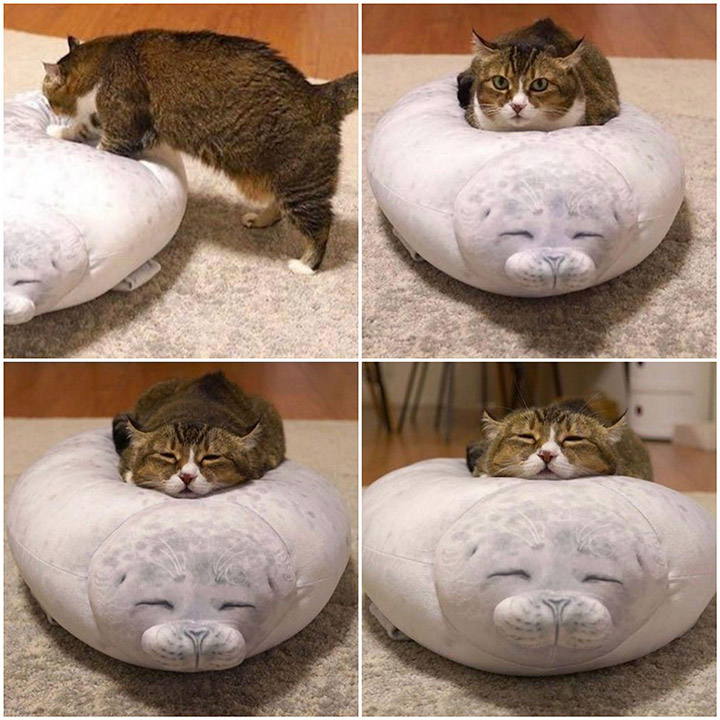 cat on fluffy seal pillow