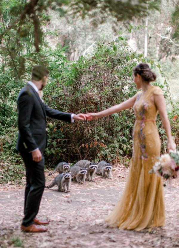 couple wedding photobombed raccoons