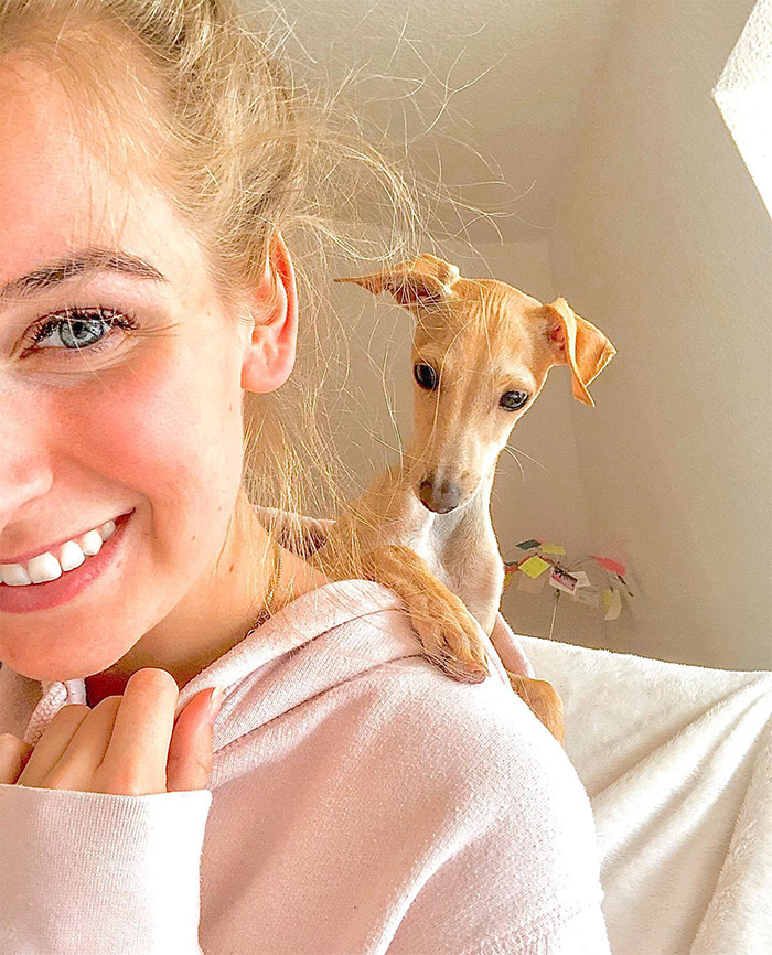 baby greyhound