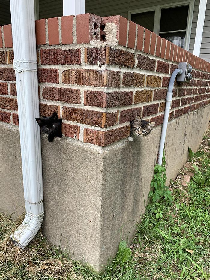 kittens in wall