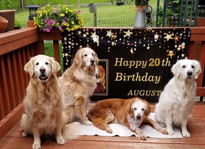 august oldest golden retriever 20