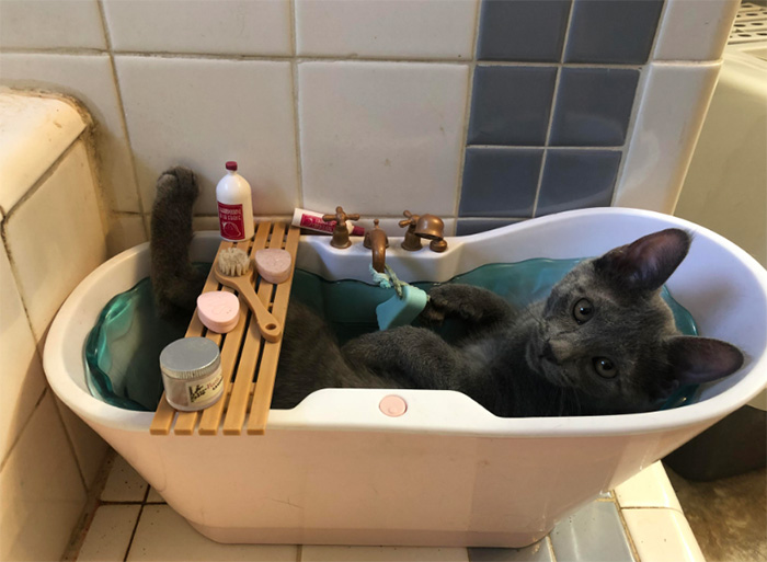kitten in toy bathtub